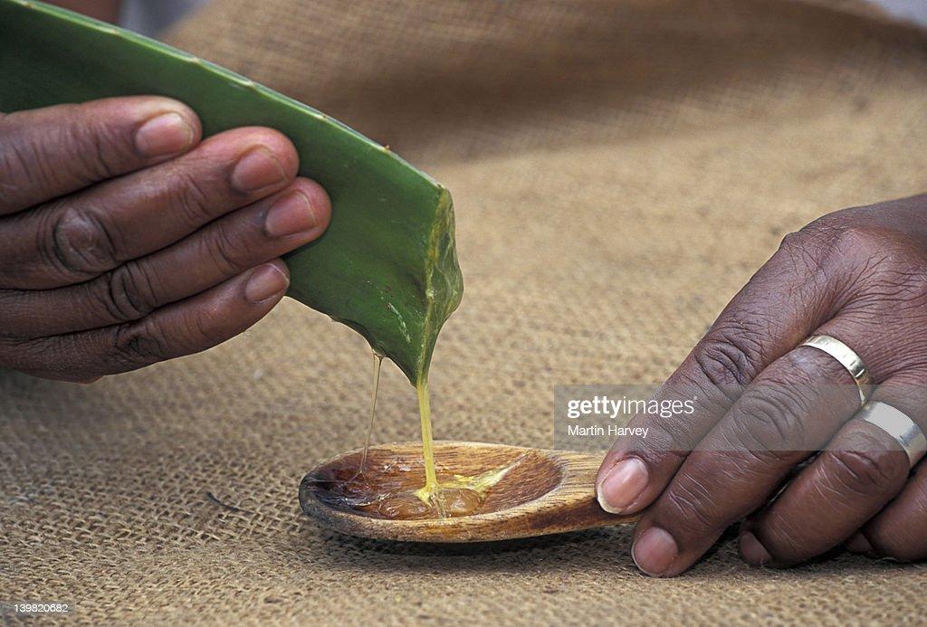 Aloe vera (Aloe barbadensis). Gel like sap high in pectin. Used in cosmetics & pharmaceuticals.