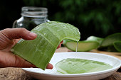 Woman hand hold aloe vera leaf with gel, a kind of herbal medicine with many use in health care, also organic cosmetic, skin care