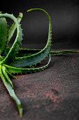 Aloe vera on brown background. Star cactus, Aloin, Jafferabad, Aloe barbadensis, Barbados herbal medicine for skin treatment and care.