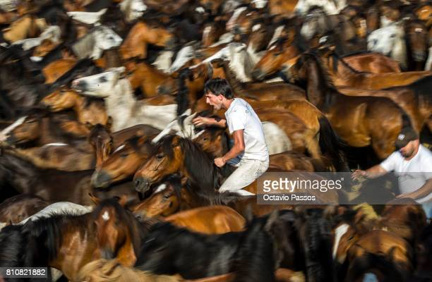 'Aloitadores' struggle and cut the mane of a wild horse during the 'Rapa Das Bestas' a traditional event in the Spanish northwestern village of...