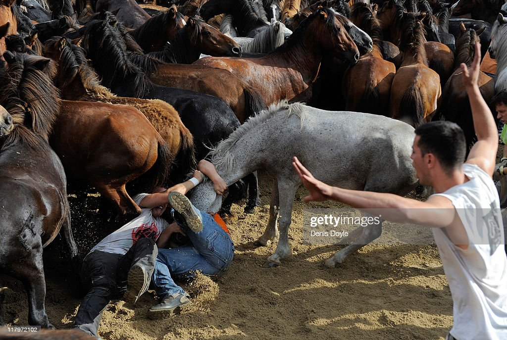 Aloitadores (fighters) try to tame a wild horse during the Rapa das Bestas (shearing of the beasts) festival on July 2, 2011 in Sabucedo, Spain. Hundreds of wild horses are rounded up from the mountains and trimmed and marked in the corral.