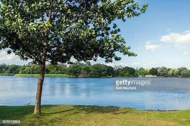 Alone tree at Beauliea lake