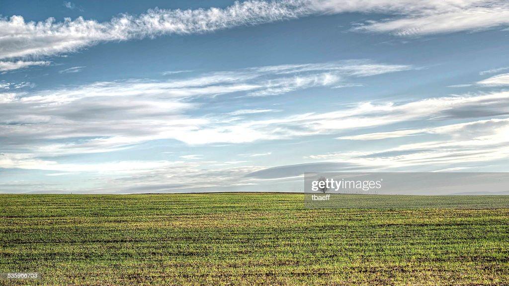 alone tree in field. landscape. : Stock Photo
