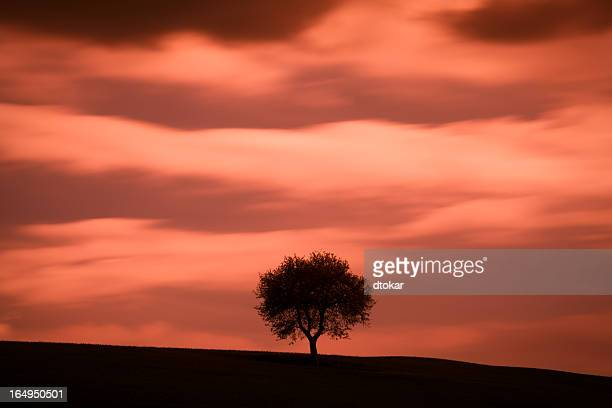 Alone tree under sunset in Tuscany