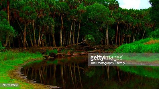 Along the Myakka river, gulf of Mexico