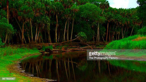 Along the Myakka river, gulf of Mexico