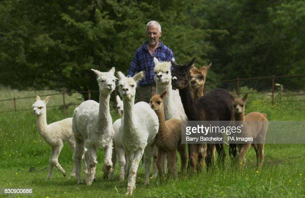 Alpacas with their owner by Ben Harford who lives near WottonunderEdge Gloucestershire When investment banker Harford decided to leave his job and...