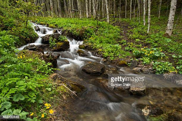 Alpine forest and stream in spring