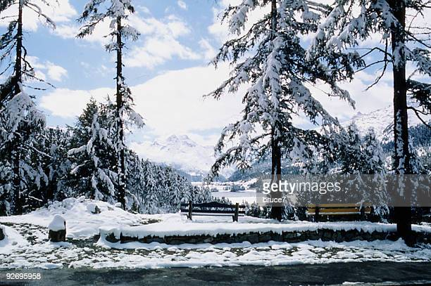 アルパイン林 Snowscene