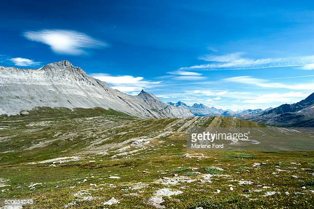 Alpine meadow and mountains