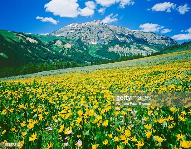 Prairie Alpine dans le Wyoming