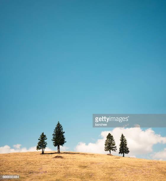 松の木と草原
