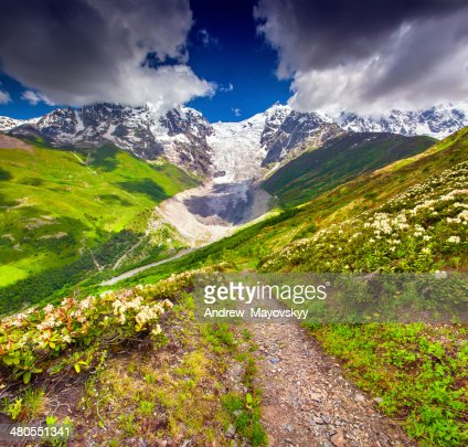 Praderas alpinas al pie del glaciar Tetnuldi, Chkhutnieri pass : Foto de stock