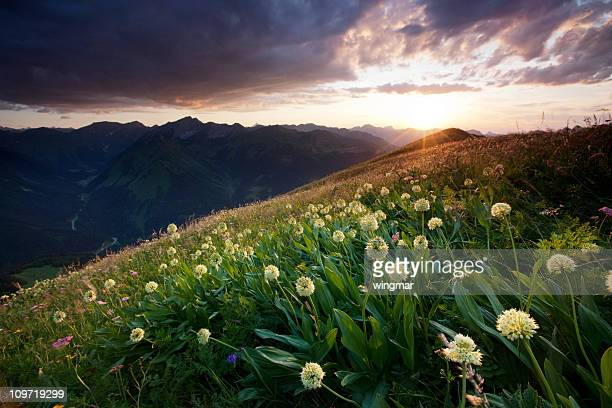 alpine Bergwiesen mit Bärlauch