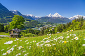 Idyllic mountain scenery in the Alps with traditional old mountain chalet and fresh green meadows in springtime