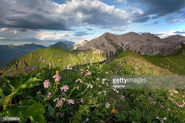 summer alpine meadows