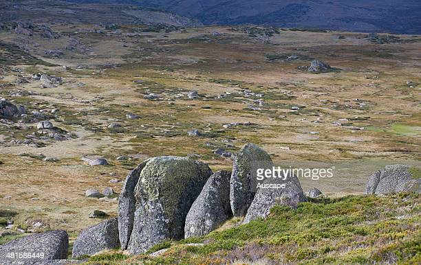 Alpine vegetation and granite boulders Main Range Kosciuszko National Park New South Wales Australia