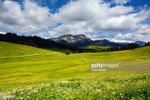 Alps spring