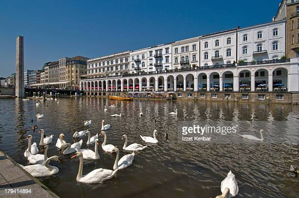 Alster Arcades and swans swimming in canal