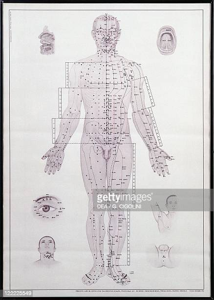 Alternative Medicine Chinese Medicine Acupuncture meridian chart