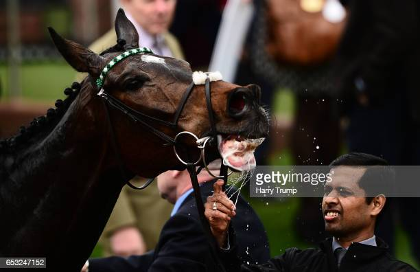 Altior has a drink of water after winning the Racing Post Arkle Challenge Trophy Novices Chase during Champion Day of the Cheltenham Festival at...