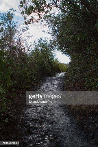 Alum Cave Bluff Trail : Stock Photo