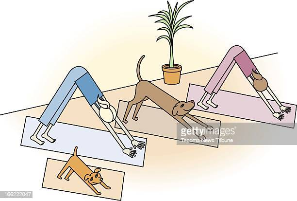 Amanda Raymond color illustration of dogs and people practicing yoga together The News Tribune /MCT via Getty Images