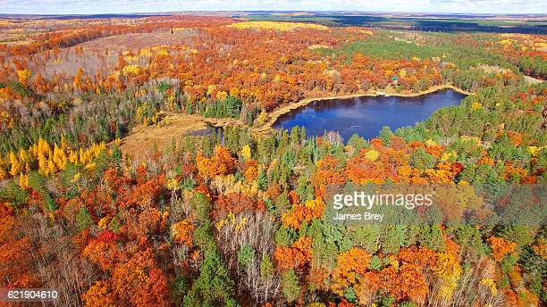 Amazing Autumn scenery, forests with lake, Fall colors, Aerial view