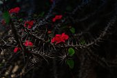 Amazing beautiful wild prickly red flowers background