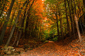 Gorgeous amazing inviting view of autumn woods, path in park