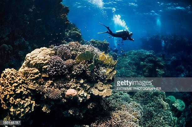 Amazing Underwater Scene