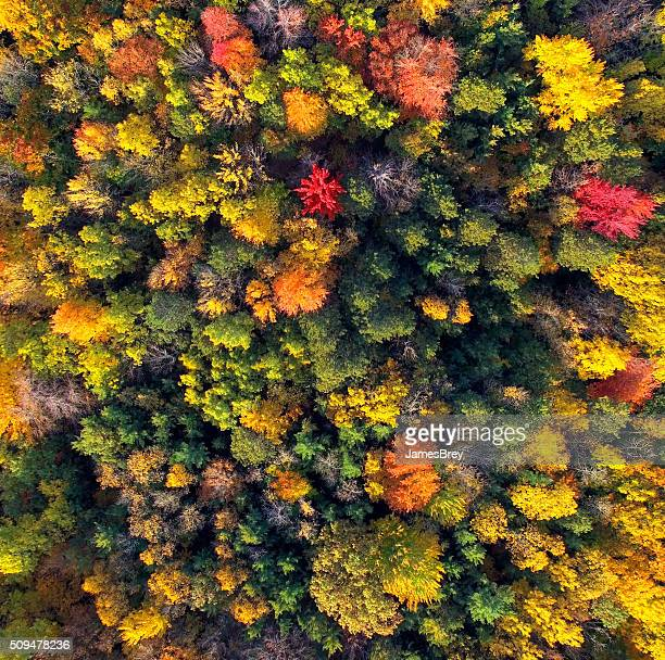 Amazingly Colorful Wisconsin Autumn Forests, Aerial View