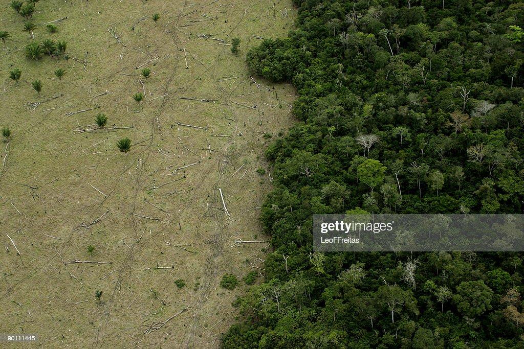 Amazon Deforestation for Cattle : Stock Photo