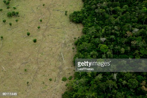 Amazon Deforestation for Cattle