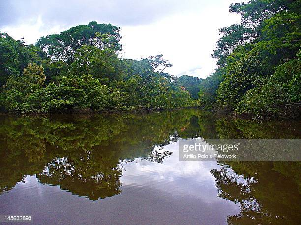 Amazon forest  reflections