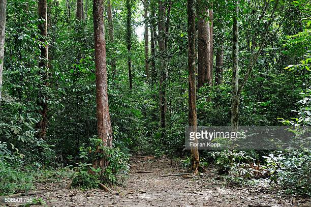 Amazon rainforest, Belem, state of Para, Brazil, South America