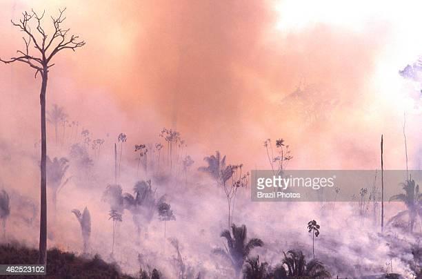 Amazon rainforest burning deforestation for livestock