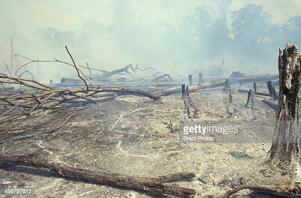 Amazon rainforest burning forest clearance for cattle raising in Acre State Brazil