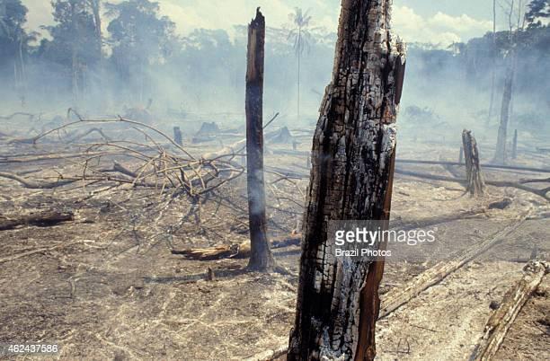 Amazon rainforest burning former dense forest becomes desert detail of burned trees
