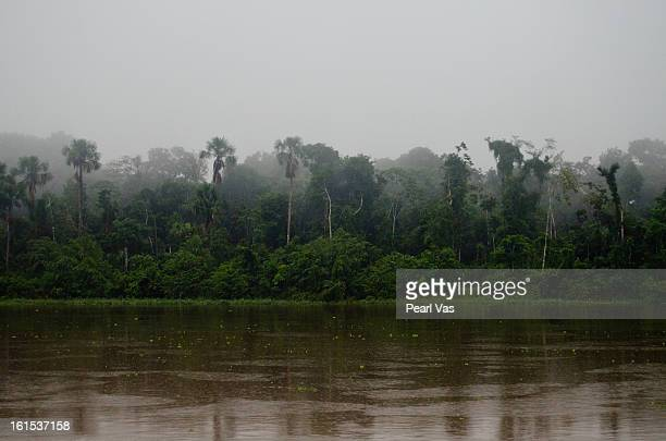 Amazon rainforest in fog with river in foreground