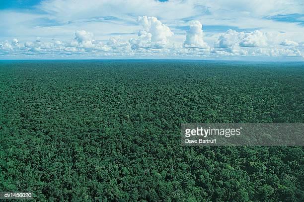 Amazon Rainforest Tree Canopy, Brazil