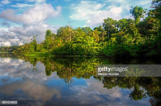 Amazon river shore rainforest reflections