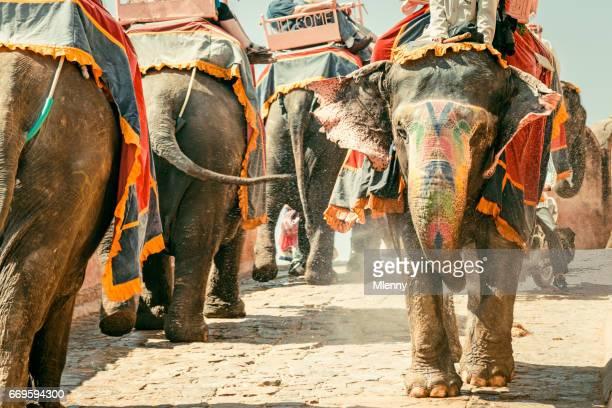 飯店琥珀宮インド象船団のジャイプール インド