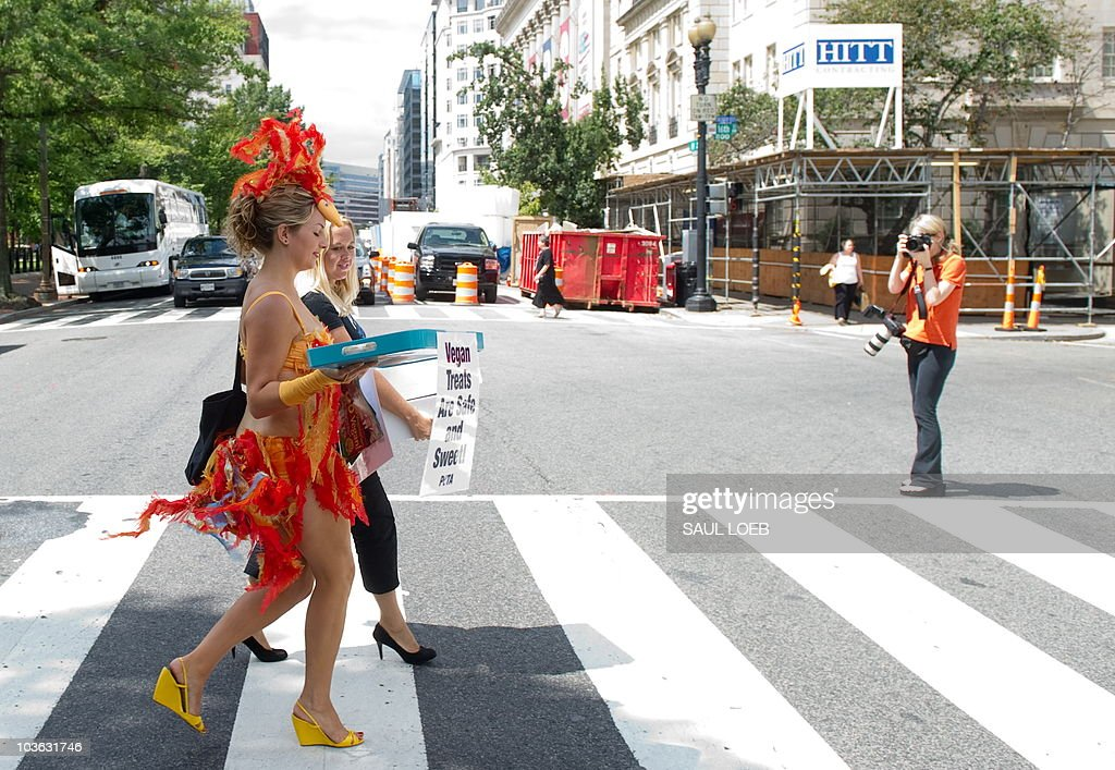 Amber TeGantvoort (L) of the People for the Ethical Treatment of Animals (PETA), dressed as a scantily-clad 'chicks' and wearing 'feathered' bikinis, walks across the road as she hands out egg-free cupcakes and pamphlets with egg-free recipes to passers-by near the White House in Washington, DC, August 25, 2010. The group is trying to bring attention to egg-free options following the recall of more than half a billion eggs during a salmonella outbreak throughout the US. AFP PHOTO / Saul LOEB