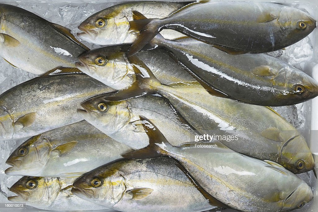 Amberjack fish : Stock Photo