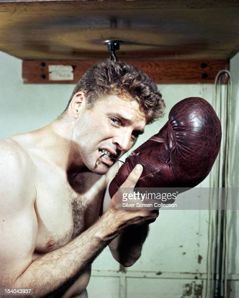 American actor Burt Lancaster lacing a boxing glove with his teeth in 'The Killers' directed by Robert Siodmak 1946 The film is Lancaster's screen...
