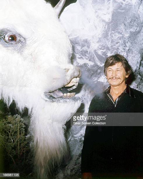 American actor Charles Bronson posing by a model of a giant white buffalo at a promotional event for 'The White Buffalo' directed by J Lee Thompson...