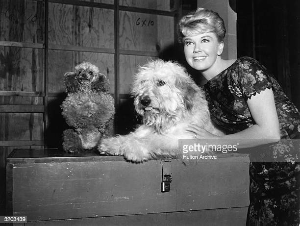 American actor Doris Day with mutt costar Hobo on the set of director Charles Walters's film 'Please Don't Eat the Daisies' Also pictured is an...