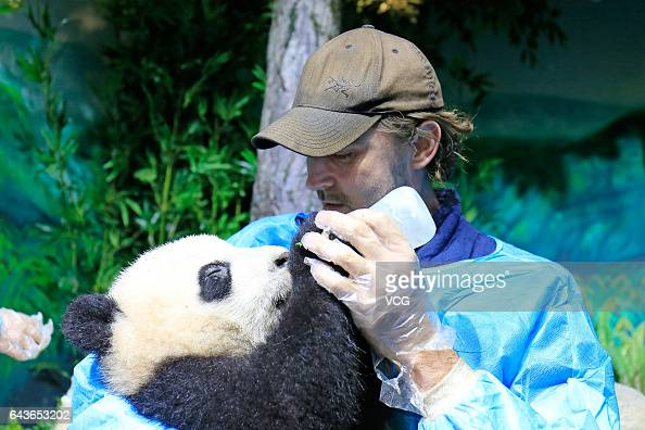 American actor Lee Pace feeds a giant panda at Chengdu Research Base of Giant Panda Breeding on February 21 2017 in Chengdu Sichuan Province of China