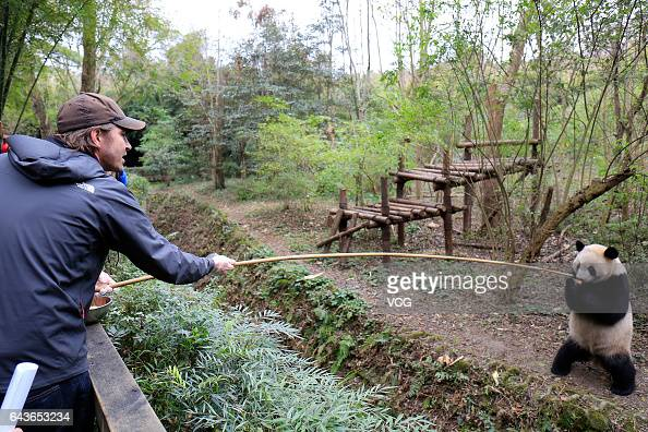 American actor Lee Pace gives a piece of apple to a giant panda at Chengdu Research Base of Giant Panda Breeding on February 21 2017 in Chengdu...